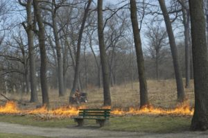 Image result for high park burn